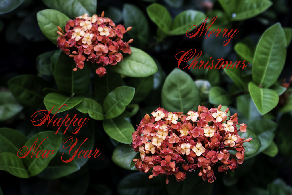 Merry Christmas and Happy New Year by sugarmuser