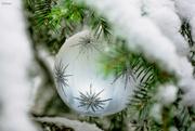 10th Dec 2020 - We got snow!