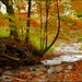 Memories of Our Golden Autumn by olivetreeann