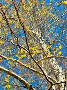 11th Dec 2020 - Bright Autumn Day