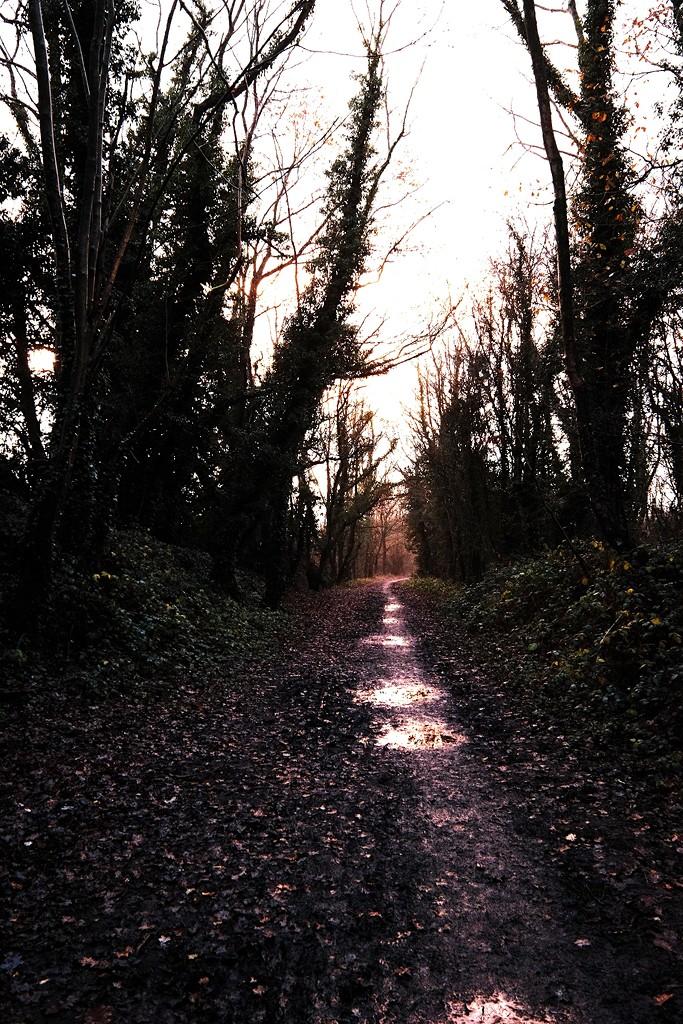 December Landscape 1 by allsop