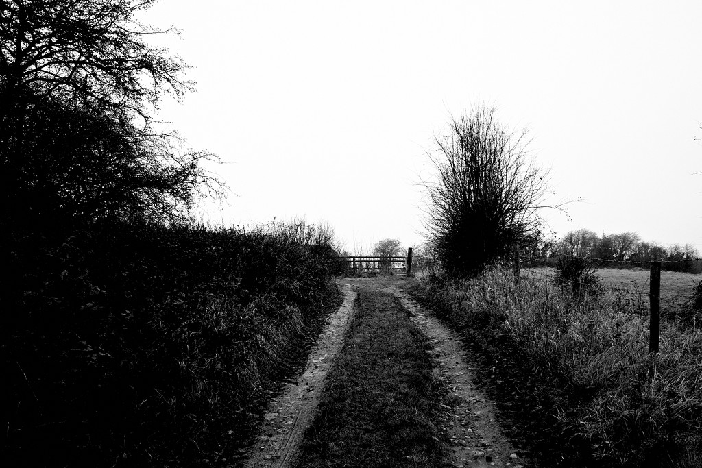 December Landscape 4 by allsop
