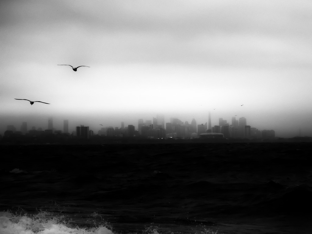 city, birds and wave by northy
