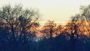 12th Dec 2020 - Sunset through the trees