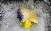 12th Dec 2020 - Frozen Viola