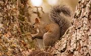 12th Dec 2020 - Squirrel Having a Snack!