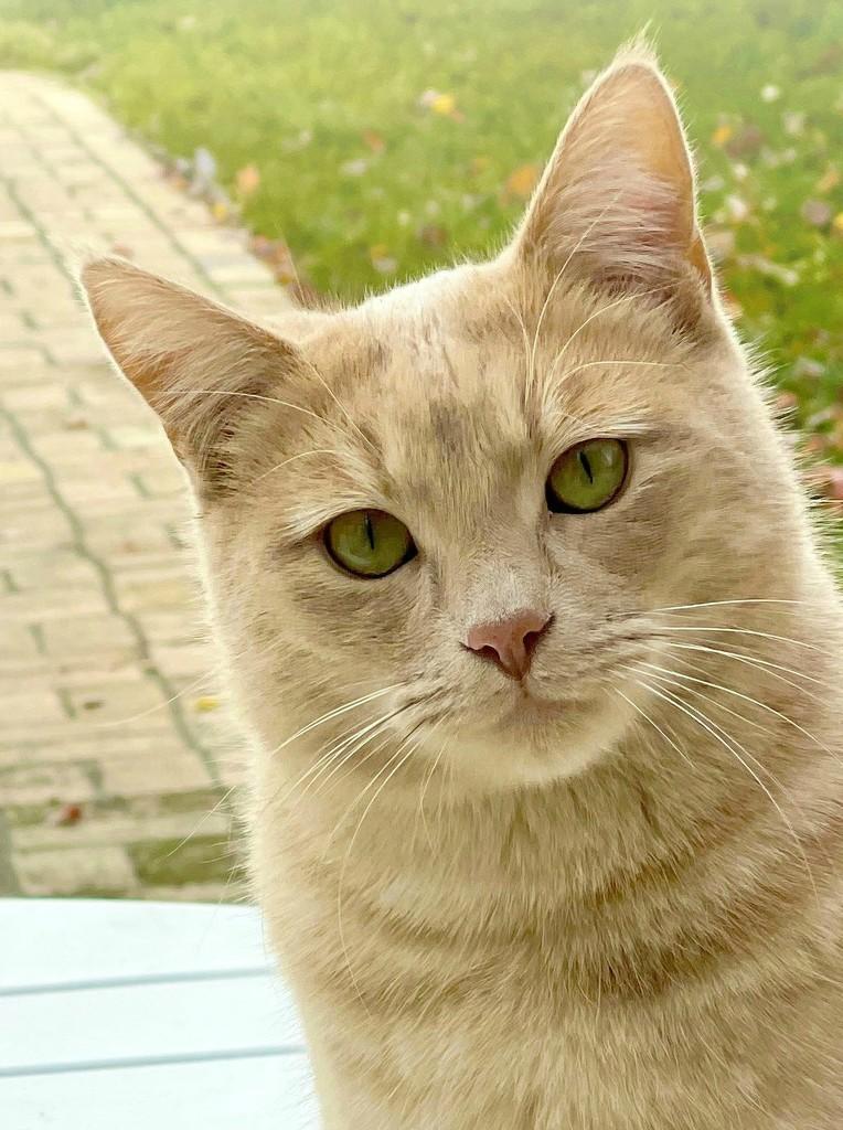 I Am the Cat by gardenfolk
