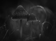 13th Dec 2020 - Two Toadstools