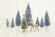 12th Dec 2020 - On December 12