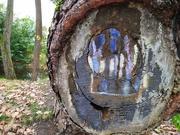 13th Dec 2020 - Sooc tree art