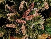 12th Dec 2020 - Fir cones