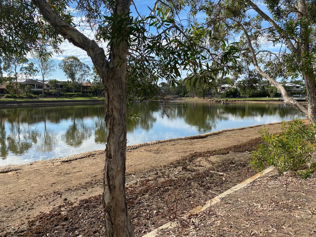 Replanting at the lake  by sugarmuser