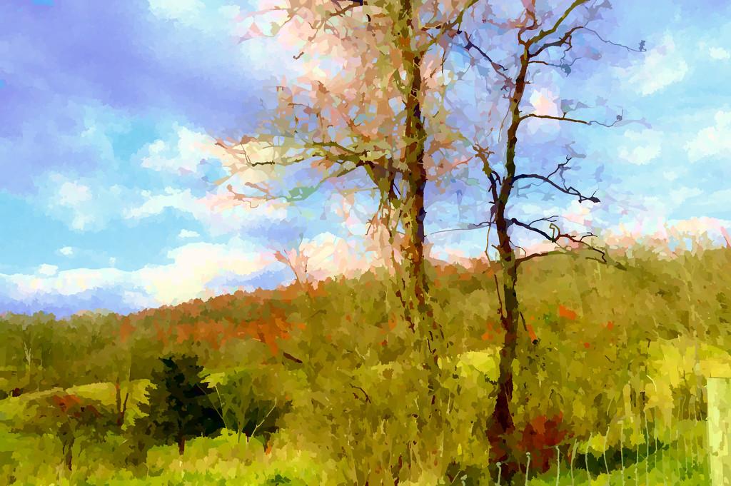 trees in field by francoise