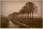 14th Dec 2020 - reflections in sepia