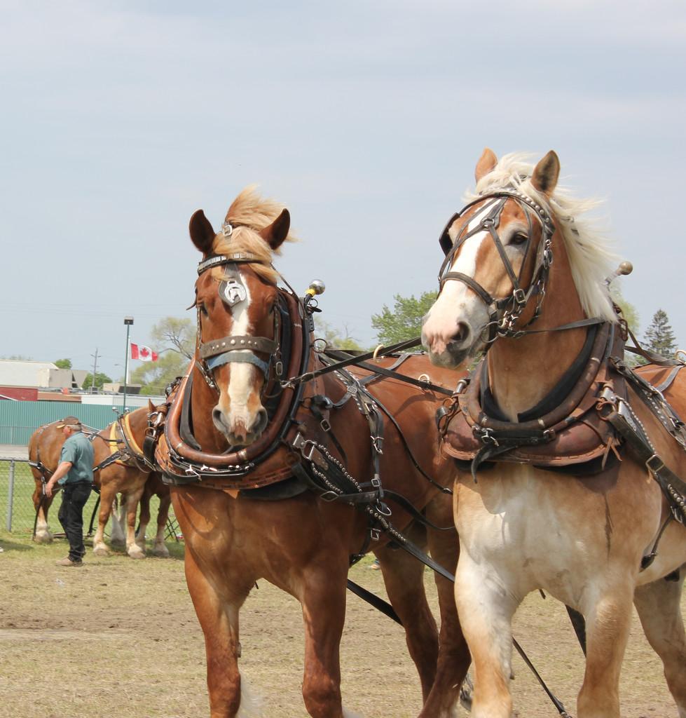 Day of the Horse by spanishliz