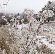 12th Dec 2020 - Frosty Morning