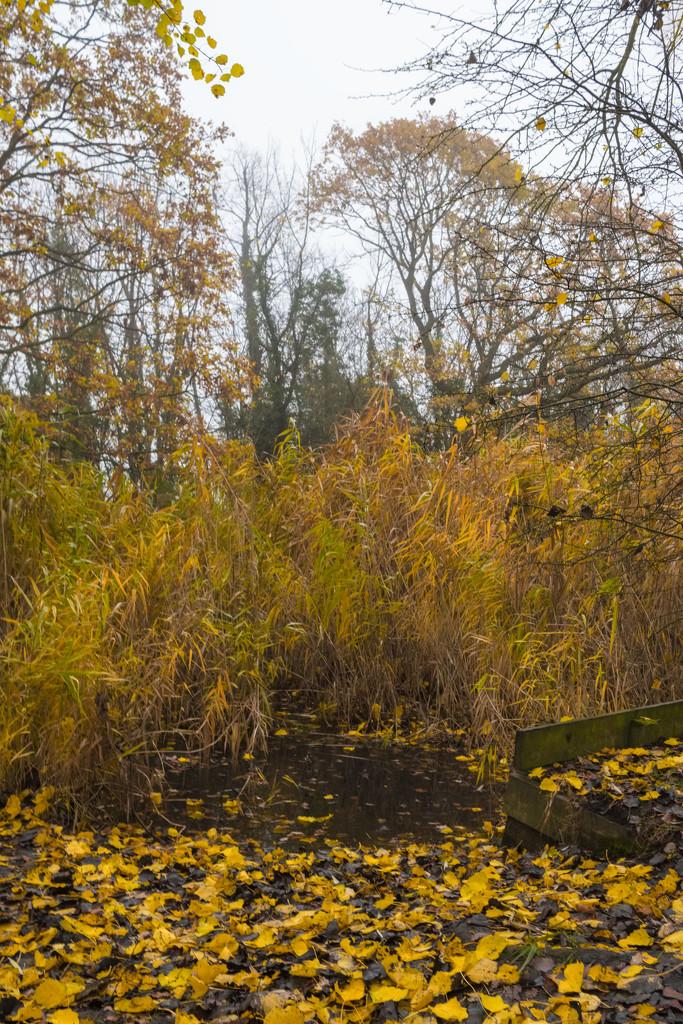 The end of Autumn by rumpelstiltskin