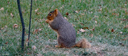14th Dec 2020 - Stubby the Squirrel