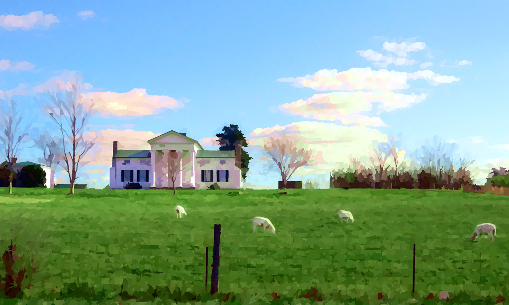 more sheep by francoise