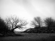 9th Dec 2020 - the hidden tree...