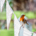 On the bunting by pamknowler