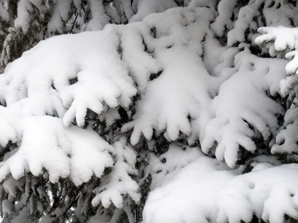 Another beautiful snow picture by bruni