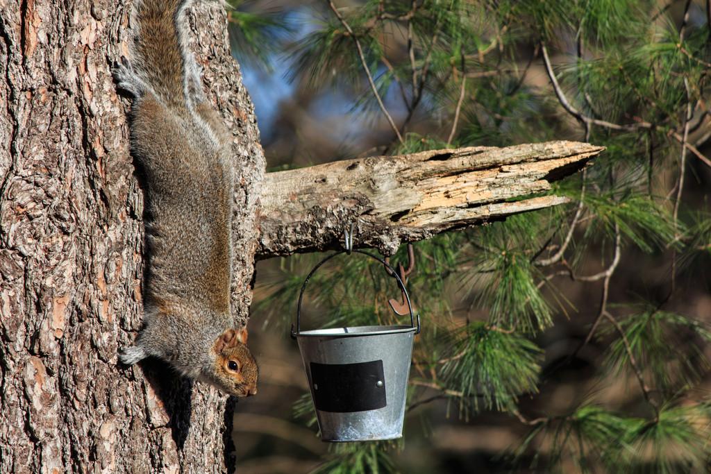 The Squirrel Bucket by batfish