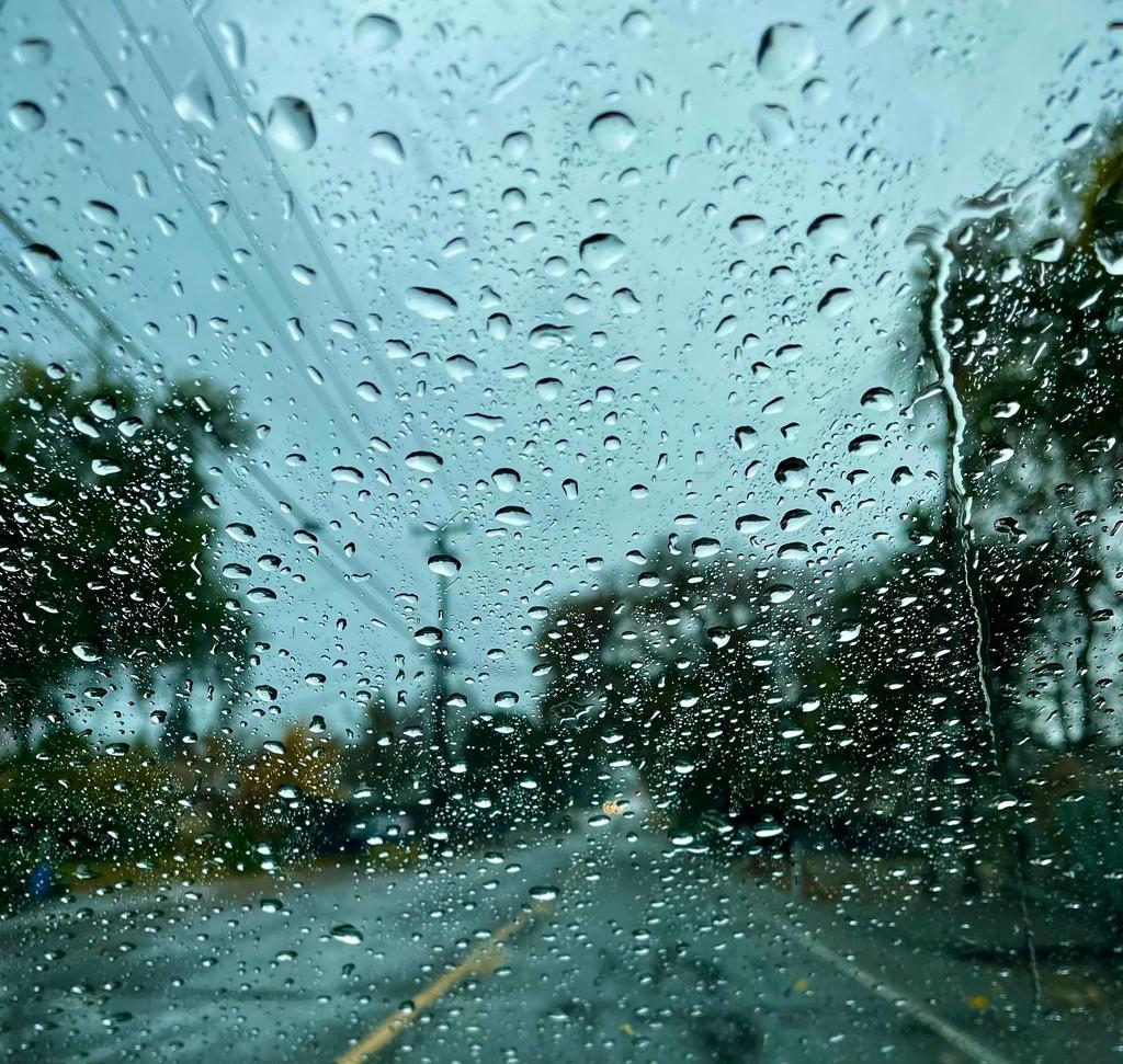 Rain Makes Everything Beautiful by gardenfolk