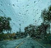 16th Dec 2020 - Rain Makes Everything Beautiful