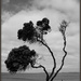 The tree by dide