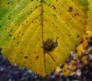 16th Dec 2020 - World in a leaf