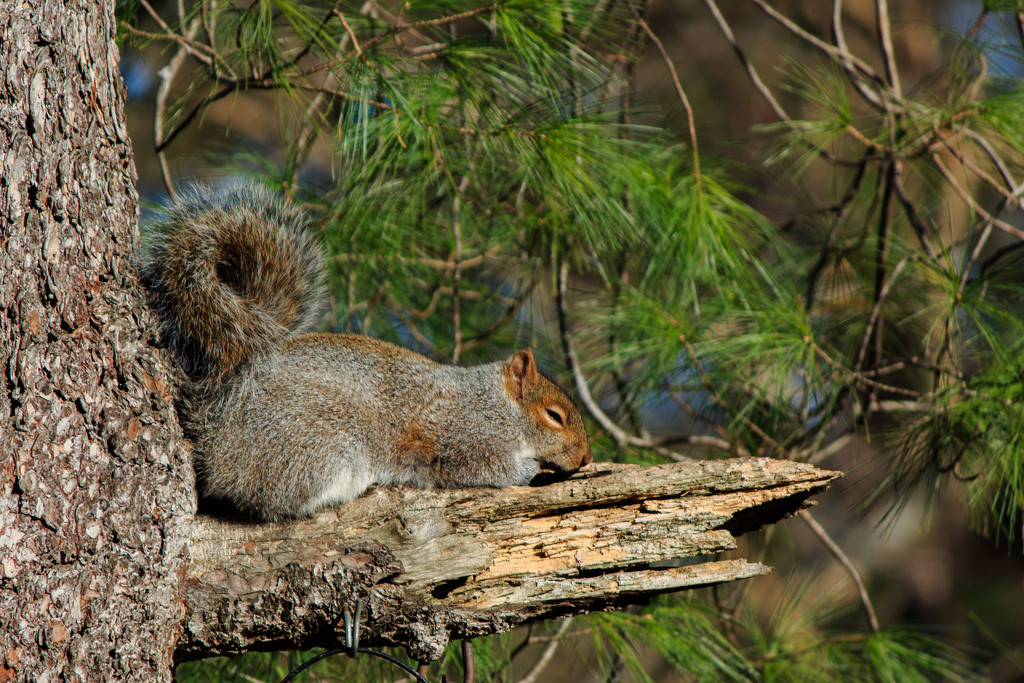 Nap time for squirrels by batfish