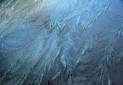 16th Dec 2020 - Frost series #2