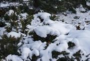 16th Dec 2020 - Let it snow
