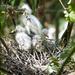 Chicks again by sugarmuser