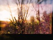 14th Dec 2020 - sunset trees