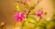 16th Dec 2020 - Yard Flower!