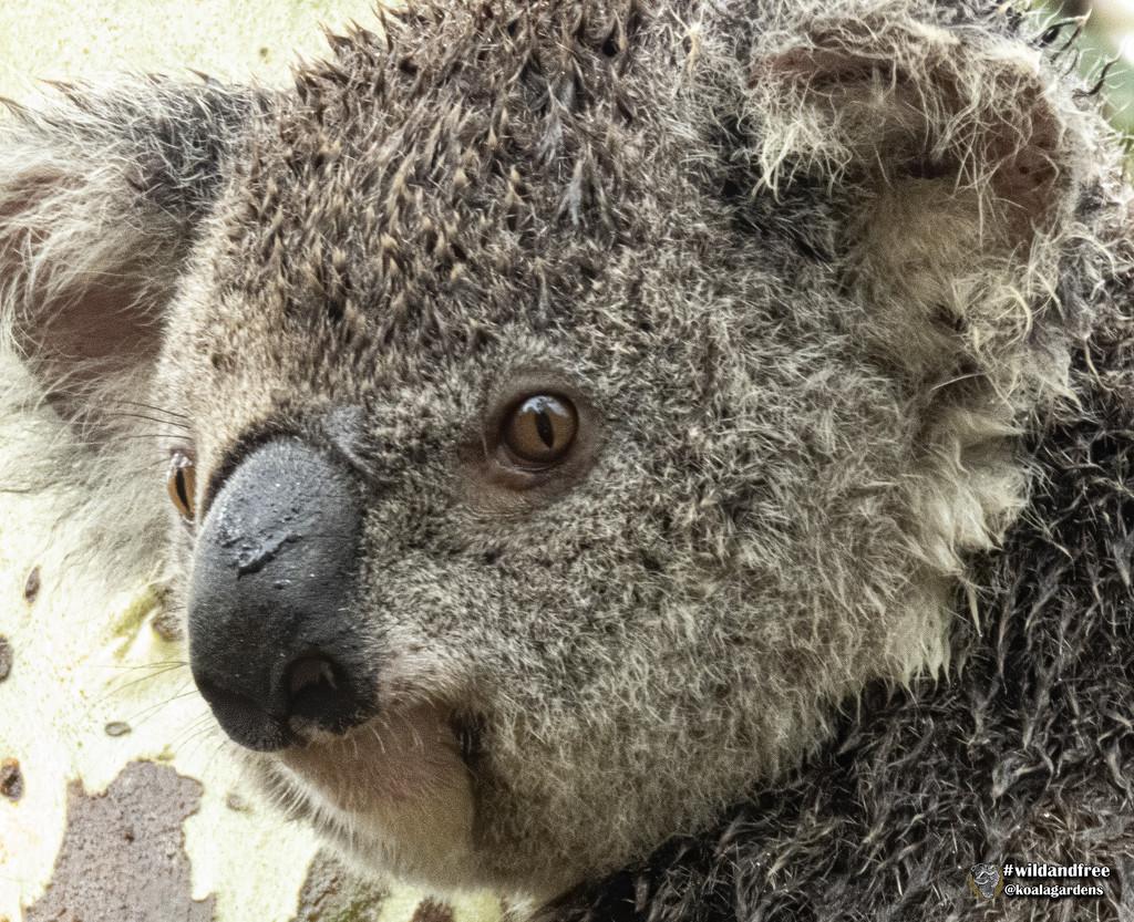 I love a rainy night by koalagardens