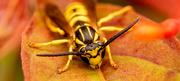 17th Dec 2020 - Bee, Up Close!