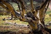 18th Dec 2020 - One tree hill
