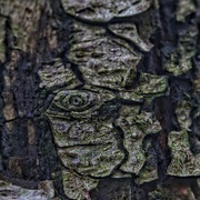18th Dec 2020 - Tree Bark