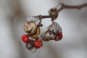 18th Dec 2020 - Frozen berries