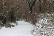 16th Dec 2020 - Snowy path
