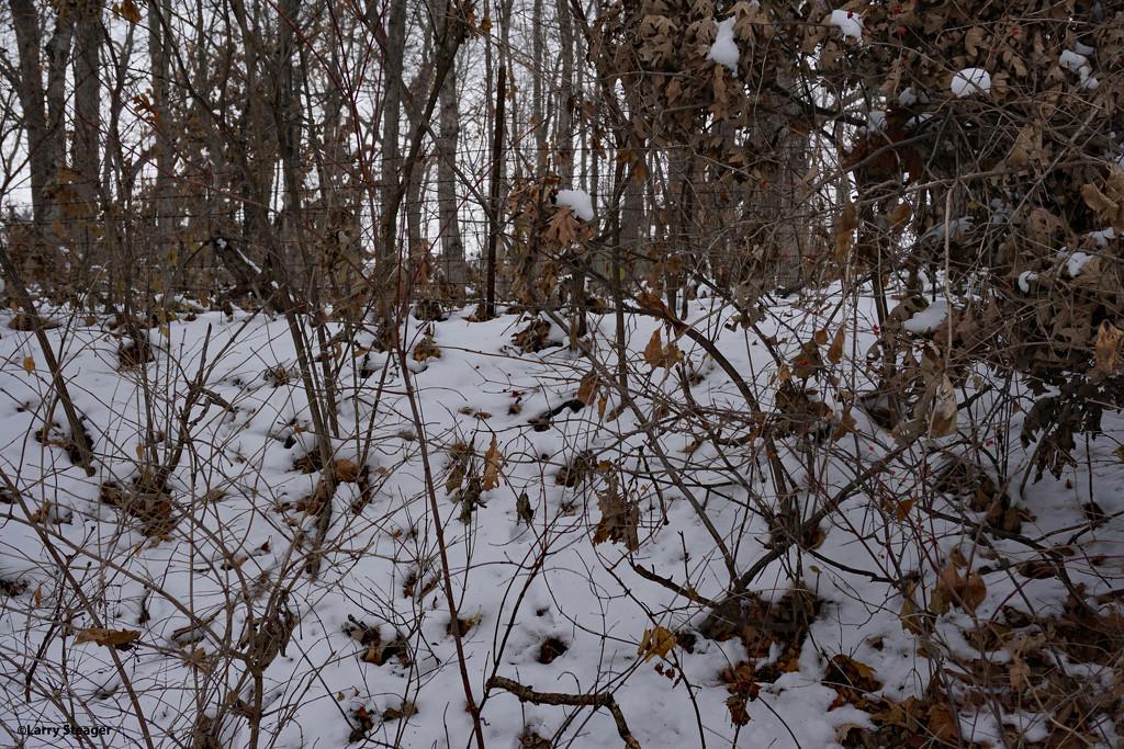 Winter wonderland 2 by larrysphotos