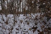 18th Dec 2020 - Winter wonderland 2