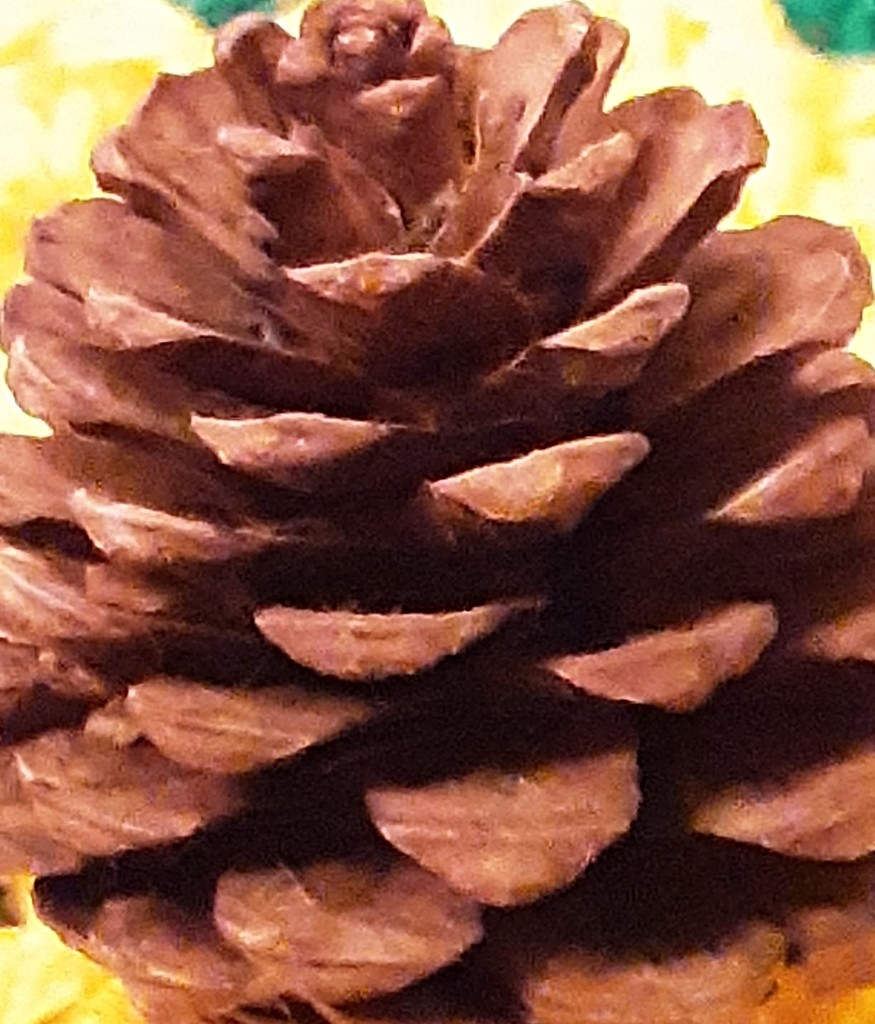 Pine Cone. by grace55