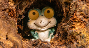 18th Dec 2020 - Frog in the Tree Stump!