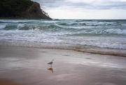 19th Dec 2020 - Jonathon Livingstone Seagull