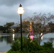 19th Dec 2020 - Colonial Lake and lighted Christmas tree