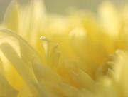 19th Dec 2020 - Mellow Yellow